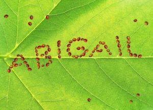 Significado de Abigail